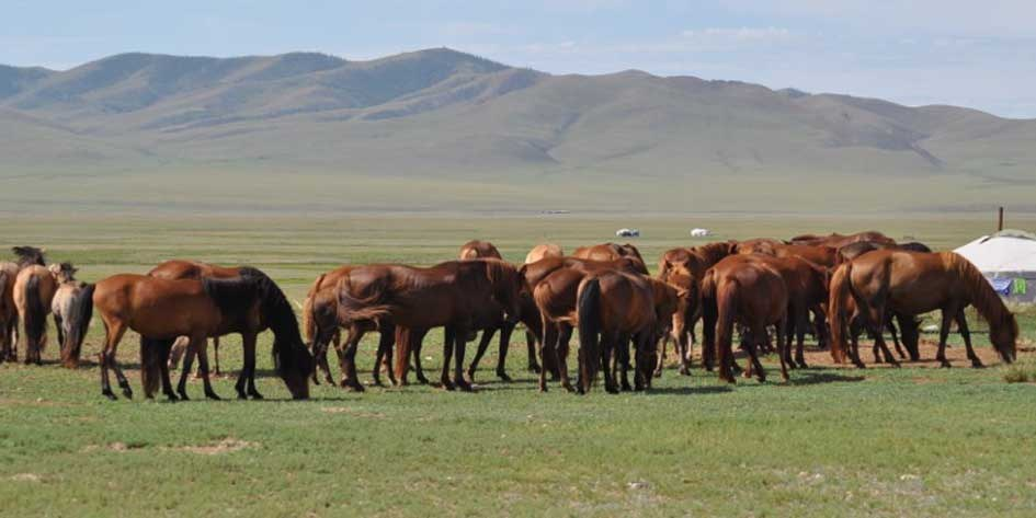 MTB_Bikereise_Mongolei