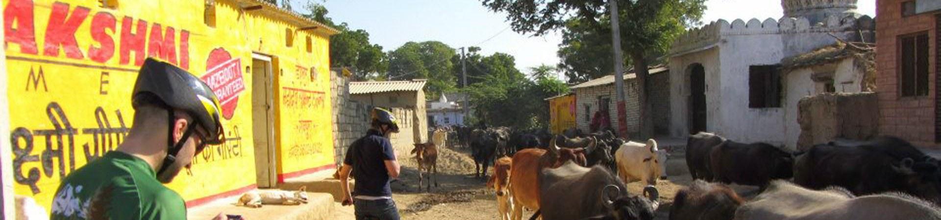 Radreise Indien - Von Bombay nach Kerala
