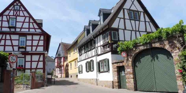 Wein_Genuss_Radreise_Winzertour_Rheingau_Rheinhessen